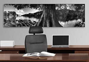 Black and White Cedar Tree over Lake - Office Art on Acrylic